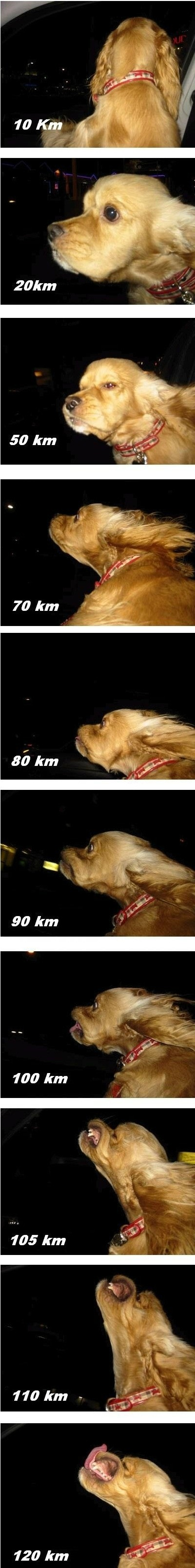 high-speed-doggy